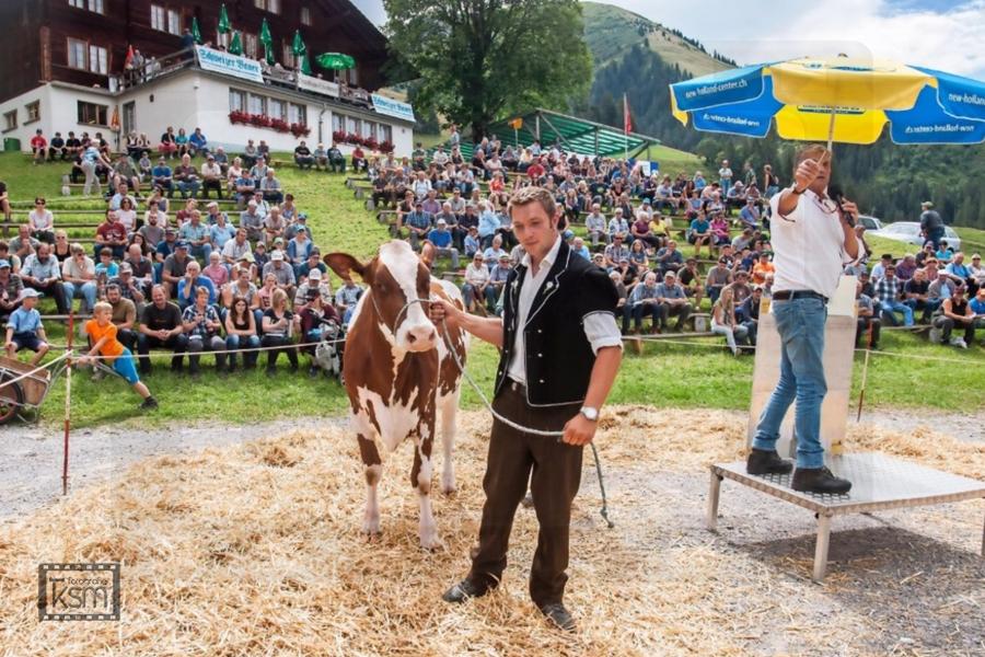 Kerem S. Maurer - Journalismus - Berner Oberländer - Kuhviehversteigerung Diemtigtal 2019